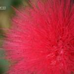 20090314_Flower-0009