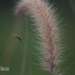 20140125_Nature-0002