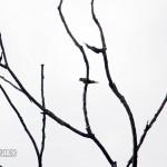 20140125_Nature-0003